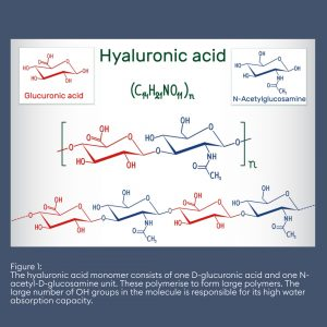 The hyaluronic acid monomer consists of one D-glucuronic acid and one N-acetyl-D-glucosamine unit. These polymerise to form large polymers. The large number of OH groups in the molecule is responsible for its high water absorption capacity.