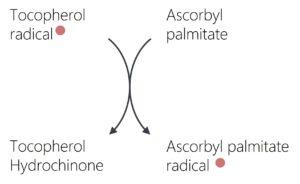 Regeneration von Tocopherol durch Ascorbylpalmitat